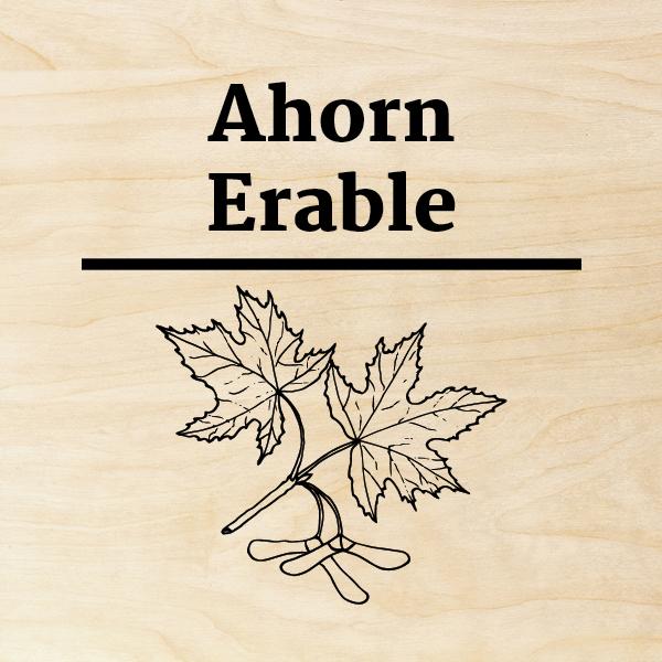 Ahorn
